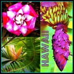HawaiiFlower#1