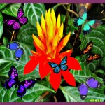 HRHSF Photo, Torch Heliconia & Butterflies Print Graphic